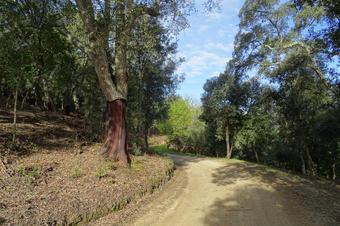 Rutes Arenys de Munt. Sureda al tram del GR 83