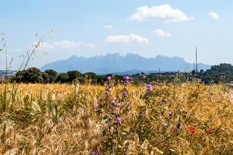 Muntanya de Montserrat. Santpedor.