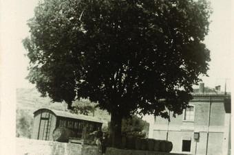 El Lledoner de l'estació de Rajadell