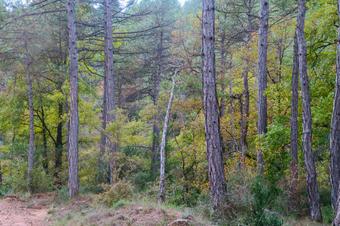 Ruta per les rieres de Sorba: l'Aigua d'Ora i Gargallà