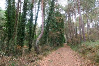 Ruta pels plans de Montmajor al Baix Berguedà