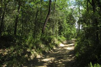 Ruta de les fonts de Sant Esteve de Palautordera
