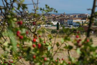 Del Pilar d'Almenara a Agramunt. Espais Naturals de les Serres de Ponent