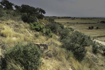Espai Natural de la Serra de Bellmunt-Almenara. Butsènit