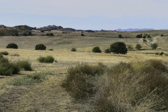 Ruta per Castellserà. Espai Natural Serra de Bellmunt-Almenara