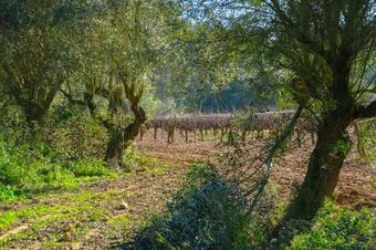 Ruta de Santa Magadalena. Les Gunyoles