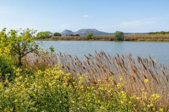 """Ruta """"La Mota del Ter i platja de la Fonollera"""". Parc Natural del Montgrí, les Illes Medes i el Baix Ter."""