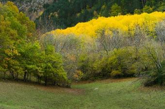 Camí als pobles de La Coma. La Vall Fosca