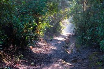 Sant Medir pel pantà de Can Borrell
