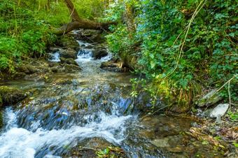 """""""Ruta de Queralbs a l'estret del Forn"""". Parc Natural de les Capçaleres del Ter i del Freser."""