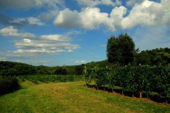 Vistes a les Vinyes Ecocci.