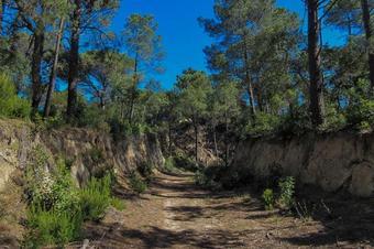 Passejada per l'Ardenya prehistòrica. Llagostera