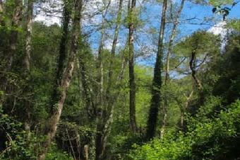 Ruta de les Gorges de Salenys