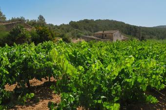 Camí del Castell Vell d'Olivella. Olivella.