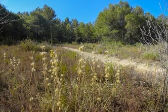 Ruta de les barraques de pedra seca. Castellolí.