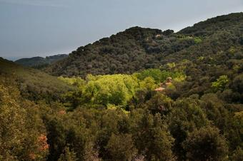 Pla de Forcs per la Serra