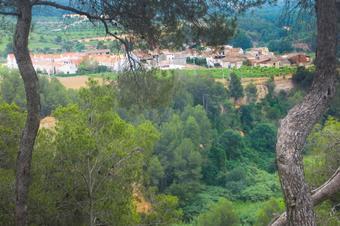 L'Anoia i la pineda de Can Ferrer del Coll. Piera.