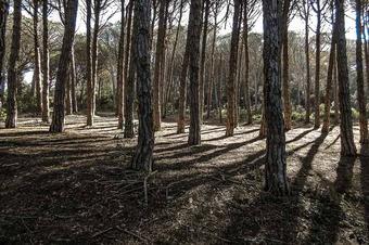 Camí de ronda de Llafranc, Calella i boscos de cap Roig.
