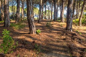 Ruta del castell de Burriac pel camí de les fonts, a Argentona.
