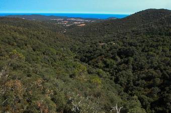 Cap al cim del Montagut. Vall-llobrega