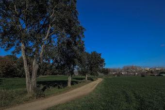 Passejada pel bosc de la Torre. Llagostera