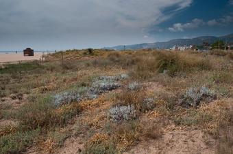 Entre torres i dunes.