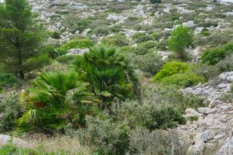 """""""Ruta del Parc del Garraf"""". Begues."""