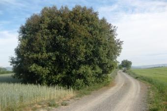 Pel camí de la Serra fins a Gallecs i el camí de ribera de la riera de Caldes. Palau-solità i Plegamans.