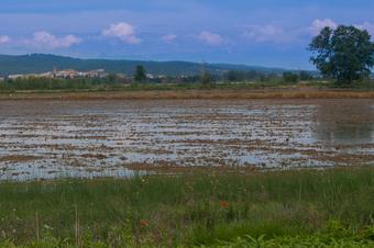 """""""Volta a l'antic estany de Bellcaire"""". Parc Natural del Montgrí, Illes Medes i Baix Ter."""