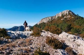 Ruta dels teixos del Marturi, a Roquetes.