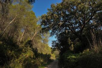 Cami antic d'Olivella. Olivella.