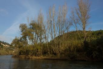 Vegetació de ribera a la llera del Llobregat