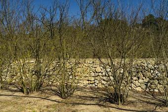 Itinerari pel riu Gaià. El Catllar.