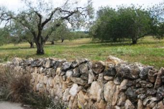 Camñí fondo de Mas Pascual. El Catllar
