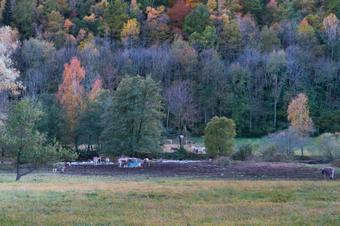 Ruta de la Molsa a Vilallonga de Ter.  Parc Natural Capçaleres del Ter i del Freser