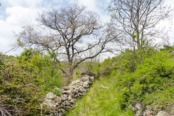 Senterada. Ruta de Larén al Pont del Diable i Estavill