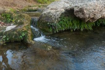 El Camí del Riu. Sant Quintí de Mediona