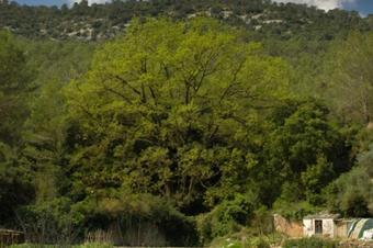 Ascensió al Puig Vicenç