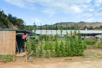 Ruta del vi i l'agricultura - Tiana