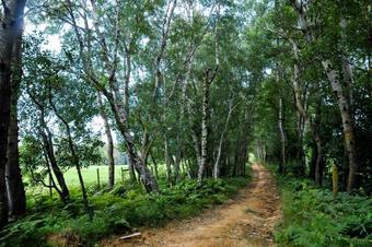 Ruta Rupit - Santuari de la Salut
