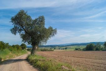 De Fontanilles a Llabià pel puig de la Font Pasquala. Parc Natural del Montgrí, Illes Medes i el Baix Ter.