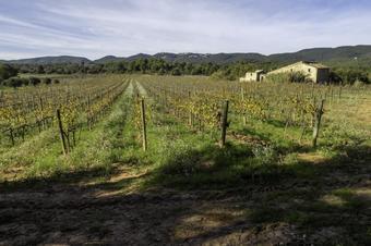 Els salts d'aigua i les vinyes de Canaletes