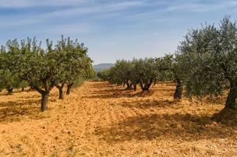 Sant Quntí de Mediona, Natura Local