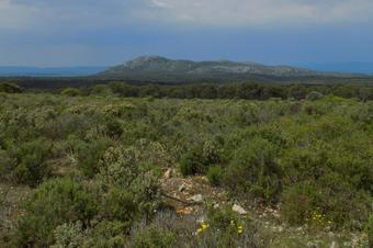 Ruta del Montgrí i el Baix Ter 1/4. Parc Natural del Montgrí, Illes Medes i el Baix Ter.